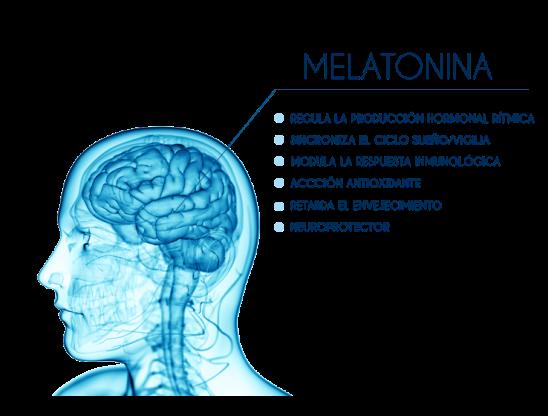Melatonina-ventajas-v2